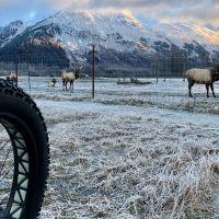 Winiter-Fat-Bike-Outdoor-Alaska-2018--GBA-Nicole-Geils-Bergszene